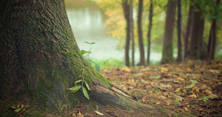 Egy nap alatt 200 millió fa